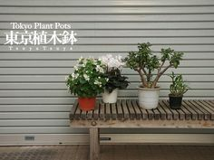Tokyo Potted Gardens -- outside just about EVERY home