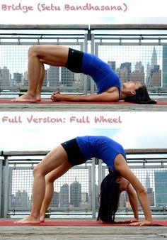 Fitness - wellness - yoga pose - Bridge (setu bandhasana)