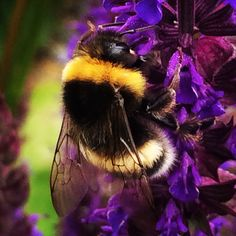Save the bee Save The Bees, Insects, Creatures, Animals, Animales, Animaux, Animal, Animais