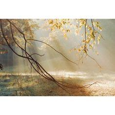 Fotobehang Morning Sun Rays