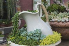 Succulents in a vintage bowl and pitcher