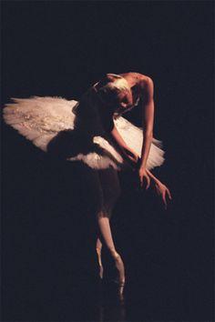Swan. Photo byNadezhda Bausova.