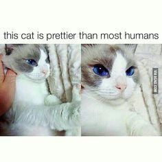 Its eyes!