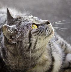 Tiger by Chloe Hutchings, via 500px
