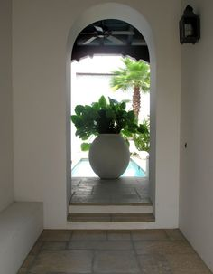 Courtyard ~ Alys Beach, Florida ~ via Italian Girl in Georgia: White Stucco and Painted Shutters, Sea Breezes and Palm Trees ~ Original Colour Photograph by Suzanne MacCrone Rogers