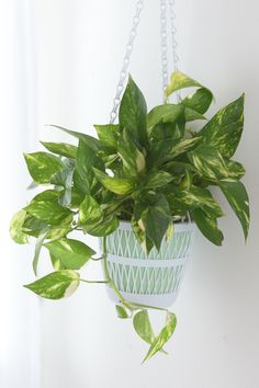 25 easy houseplants easy to care for indoor plants bathroom plants feng shui bathroom plant decor Low Maintenance Indoor Plants, Low Maintenance Garden, Leafy Plants, Green Plants, Potted Plants, Semarang, Inside House Plants, Golden Pothos Plant, Patio Plans