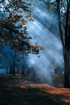 """~ Autumn ~ """"Autumn arrives in early morning, but spring at the close of a winter day."""" ~Elizabeth Bowen"""