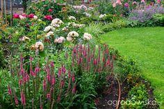 Ogrodowa przygoda Łukasza :) - strona 699 - Forum ogrodnicze - Ogrodowisko
