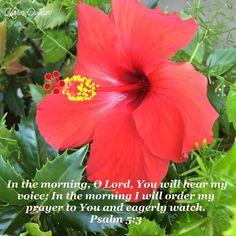 #verseoftheday #morningpraise #morningprayer