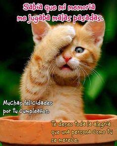 Imagen Graciosa de Gato con Mensaje de Cumpleaños - ツ Imagenes y Tarjetas para Felicitar en Cumpleaños ツ