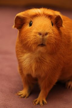 IMG_1034 by Guinea Planet, via Flickr