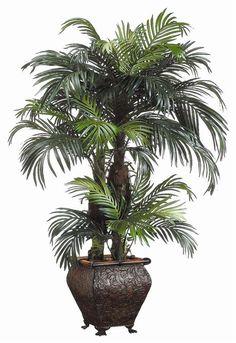 Phoenix Palm floor plant.