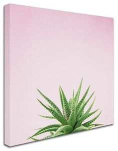 Felicity Bradley 'Succulent Simplicity I on Pink' Canvas Art (35 in. W x 35 in. H), Green