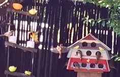 Greenside Birds Love the new Feeder
