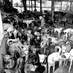 Animal Hoarding (quando si accumulano animali) | DISPOSOFOBIA.ORG