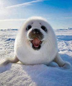 Incríveis fotografias: animais fofos - Bubunoni