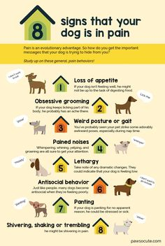 8 Signs Your Dog Is In Pain (and What You Can Give Fido for Doggy Pain Relief!) - If youre like me, seeing your dog in pain is terrifying.Yet, their well-being depends on us staying calm to look for signs and symptoms of doggy pain. Dog Health Tips, Pet Health, Pet Dogs, Dogs And Puppies, Doggies, Havanese Dogs, Dog Body Language, Dog Information, Dog Facts