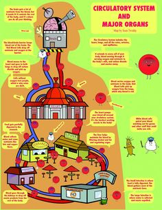 Circulatory System and Major Organs map #infographic #health # human body