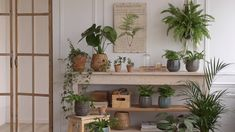 Our Plant Goals for - Dalla Vita - Houseplants in the Bedroom Airy Bedroom, Bedroom Decor, Plant Wall, Plant Decor, Suculentas Interior, Decoration Plante, Cozy Living Rooms, Amazing Gardens, Houseplants