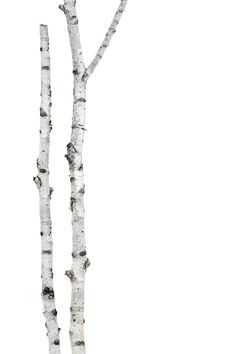 birch (mary jo hoffman)
