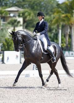 Zonnerhall O - Small tour confirmed KWPN gelding by Gribaldi. In professional training since a 5yo and has come through the levels with great success. 2014 I-I Open Reserve Champion. Showing I-II and soon ready for the Grand Prix. Has very classical piaffe/passage! $225,000
