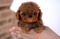 Un petit chien marron sur http://flepi.net