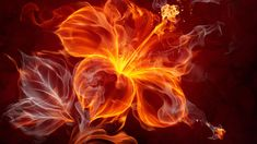 Fire Flower Wallpapers, Fire Flower High Quality Wallpaper Tag: FHDQ Fire Flower Wallpapers, Backgrounds and Pictures for Free, Elnora Redford Wallpapers-Web Pack II: Fire Flower, by Davina Rorie