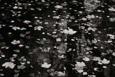 photo nature | free download photobank of black and white photos Black White Photos, Black And White, Free Black, Christmas Tree, Holiday Decor, Water, Painting, Art, Teal Christmas Tree