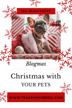 Christmas with pets Christmas Travel, Christmas Music, Christmas Love, Left Alone, Hello Everyone, Girl Boss, Live For Yourself, Wonderful Time, More Fun