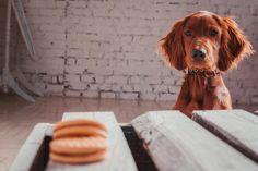 Die 10 häufigsten Erziehungsfehler beim Hund - Kennt ihr das auch?