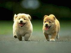 PUPPYS!!!