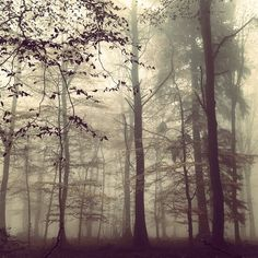 "@ythamm's photo: ""#紅葉#森#霧#ハイデルベルク#ドイツ#herbst #heidelberg #natur #nebel #schön"""