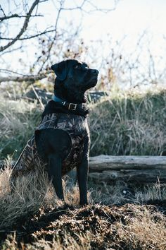 Field Guide: Duck Hunting the Skagit County Coastline Hunting Photography, Animal Photography, Equine Photography, Hunting Wallpaper, Big Deer, Waterfowl Hunting, Black Lab Puppies, Large Dog Breeds, Best Dogs