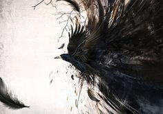 Fotolia TEN Contest   Raven by Paweł Kozakowski