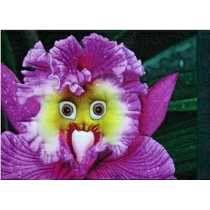 50 Sementes Orquídea Papagaio Rara P/mudas Planta Bonsai
