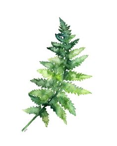 This is a fine art giclée print made from my original watercolor painting Fern Study 1. PRINT DESCRIPTION - Printed on Epson Stylus Inkjet