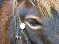 1000+ images about Equine Color: Pangare / Mealy on ...