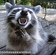 cute captions 13 Daily Awww: Funny captions make cute photos better photos) Awkward Animals, Cute Funny Animals, Funny Cute, Funny Pics, Hilarious, Cute Captions, Animal Captions, Cute Raccoon, Racoon