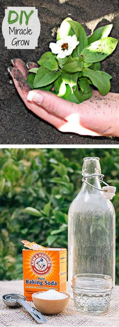 #DIY Miracle Grow: 1 gallon of water, 1 tbsp epsom salt, 1 tsp baking soda, 1/2 tsp of Household ammonia. Mix all ingredients together and use once a month on your plants.