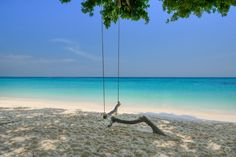 Swings on the Beach Background