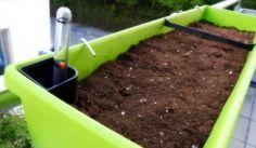 [Werbung] Hier noch ein Bild vom befüllten emsa My CITY GARDEN Balkonkasten (mit Wasserspeicher). Hier sieht man auch die Wasserstandanzeige und auch die Haken der Halterung vom emsa Balkonkastenhalter VARIO COMFORT https://blackedgold.wordpress.com/2018/05/21/emsa-my-city-garden-balkonkasten-teil-1/ - https://produkttest.emsa.com/?view=social&type=reply&id=463445