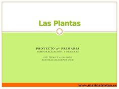 Las plantas by Marina Tristán via slideshare