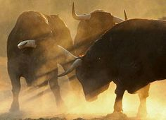 Bulls looking for a fight Taurus, Bull Painting, Bull Cow, Bull Riding, Tier Fotos, Mundo Animal, Wild Nature, Animal Paintings, Cattle