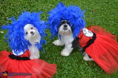 Danielle: Luna and Ellie are wearing Dr. Seuss inspired Thing 1 and Thing 2 Costumes that get them attention from afar. Few can resist these fluffy blue wig wearing pups! https://www.etsy.com/shop/sewdoggonecreative?ref=hdr_shop_menu.