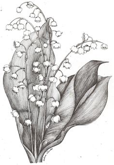 Lily Of the Valle Flower Drawing Lily Of the Valle Flower Drawing. Lily Of the Valle Flower Drawing. Hand Drawn Lily the Valley Flowers Stock Illustration in lily flower drawing Lily of the Valley by Moonie Dreamer Flower Art Drawing, Flower Sketches, Art Drawings Sketches, Botanical Drawings, Botanical Art, Lily Of The Valley Flowers, Fabric Painting, Pencil Art, Artwork