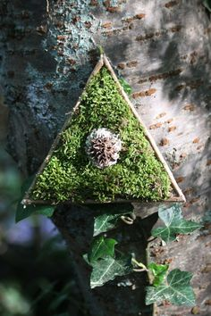 Land art sculpture consisting of a triangle shape joined by slivers of wood with a backing made of bark with living moss, lichen on a piece of bark and half a sweet gum ball all mounted to the bark via cactus thorns.