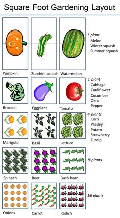 The ten basic tenets of square-foot gardening are: Arrange your garden in squares, not rows. Lay it out in planting areas. Build boxes to hold a new soil mix above ground. Space boxes apart to form walking aisles. Fill boxes with Mel' Veg Garden, Garden Types, Garden Care, Edible Garden, Garden Plants, Vegtable Garden Layout, Vegetable Gardening, Veggie Gardens, Beginner Vegetable Garden