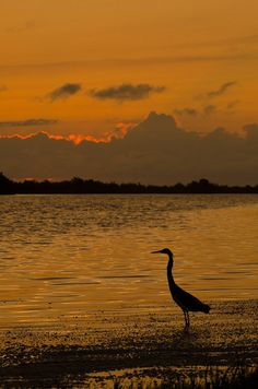 Tigertail Beach County Park, Marco Island, Florida by ronniegoyette, via Flickr