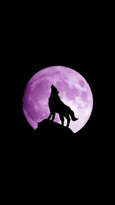 wolf, moon, night – My CMS Wolf Wallpaper, Cute Wallpaper Backgrounds, Animal Wallpaper, Fantasy Wolf, Fantasy Art, Animal Sketches, Animal Drawings, Wolf And Moon Tattoo, Wolf Colors