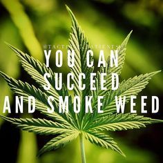 Medical You don't have to burn marijuana to succeed, you can eat your cannabis! Canna-Circle You don't have to burn marijuana to succeed, Stoner Quotes, Weed Quotes, Weed Memes, Weed Humor, 420 Quotes, Stoner Art, Funny Quotes, Ganja, Frases